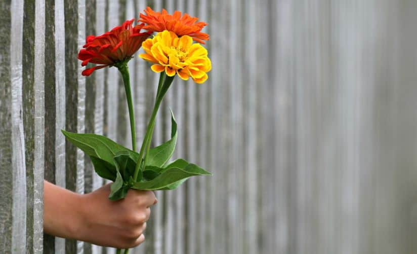 flowers for a gift