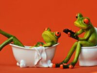 frogs in toilet room